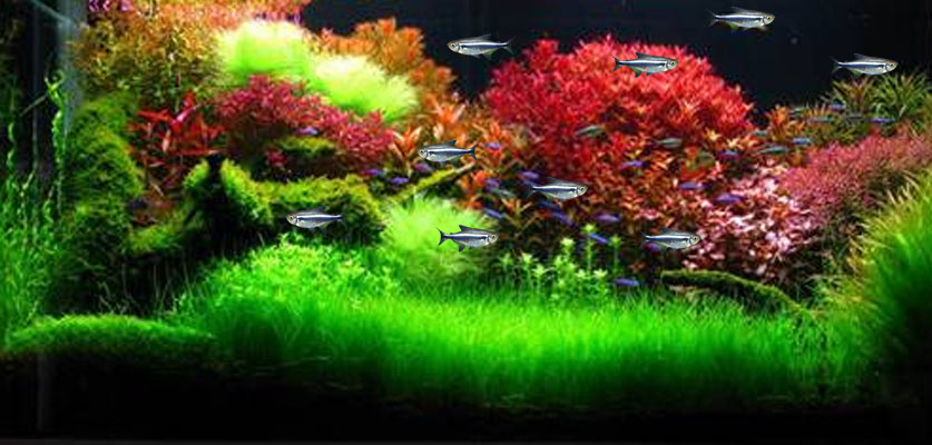 Black Neon Tetra Wallpaper