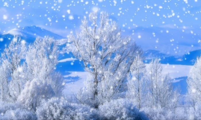 Winterscenes main window jgoware winterscenes snow - Free screensavers snowflakes falling ...