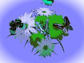 3D Wonderful Flowers Screenshot