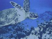 Free Underwater World Screensaver Screenshot