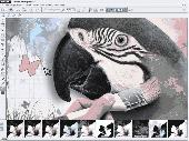 MAGIX Photo Designer Screenshot