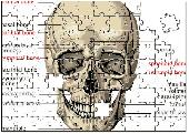 Human Skull Puzzle Screenshot
