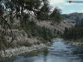 River In The Woods Screensaver Screenshot