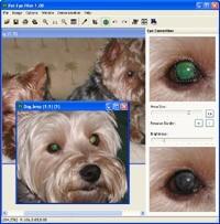 Pet Eye Pilot