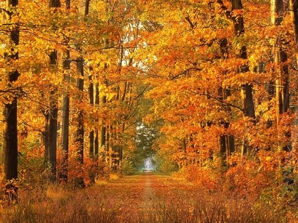 Autumn Animated Wallpaper