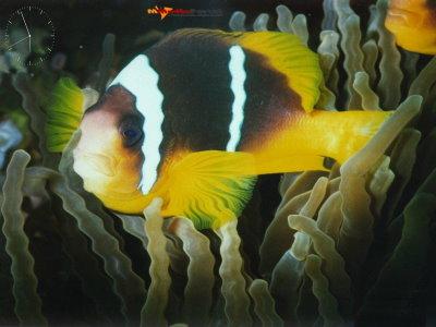 Big Fish Screensaver