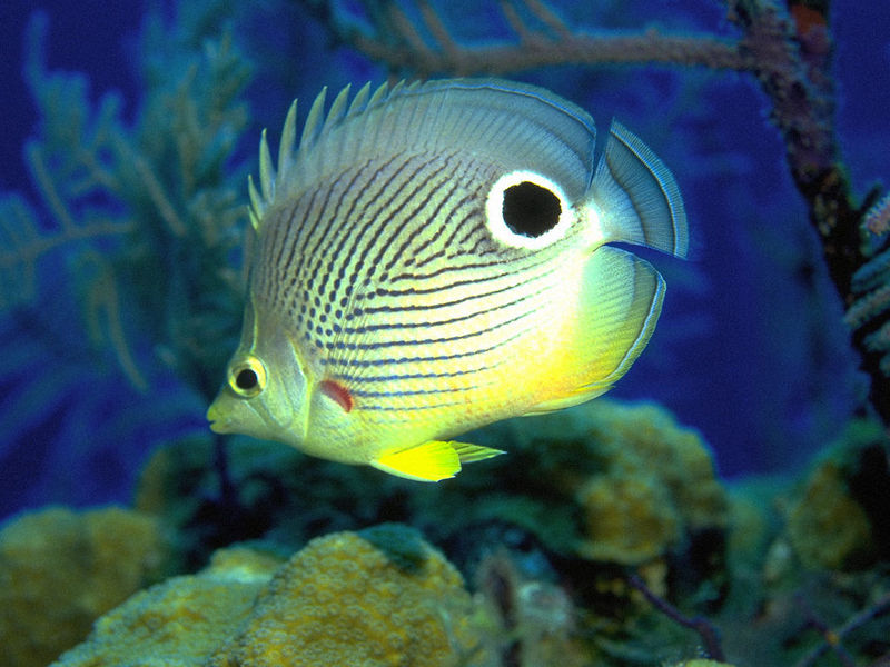 Bright Fishes Free Screensaver