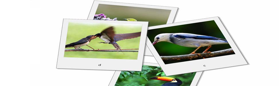 Desktop Bird Screensaver