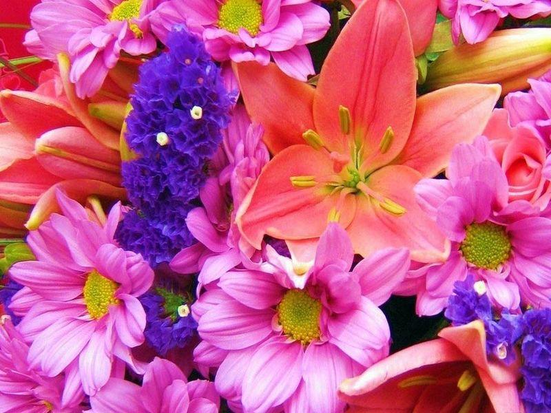 Nice Flowers Free Screensaver