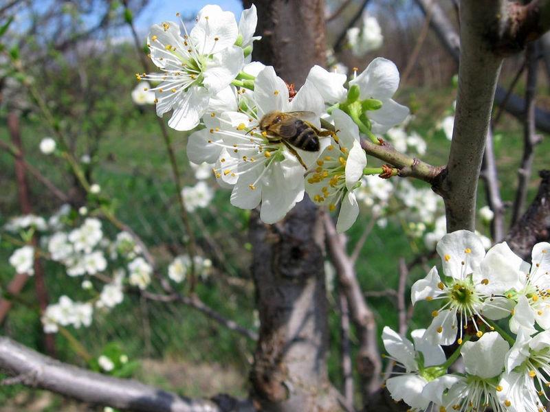 Spring Flourish Free Screensaver