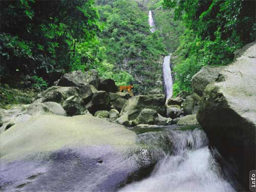 AD Jungle Waterfall - Animated Desktop Wallpaper