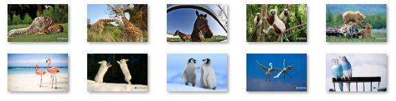Animal Pals Windows 7 Theme