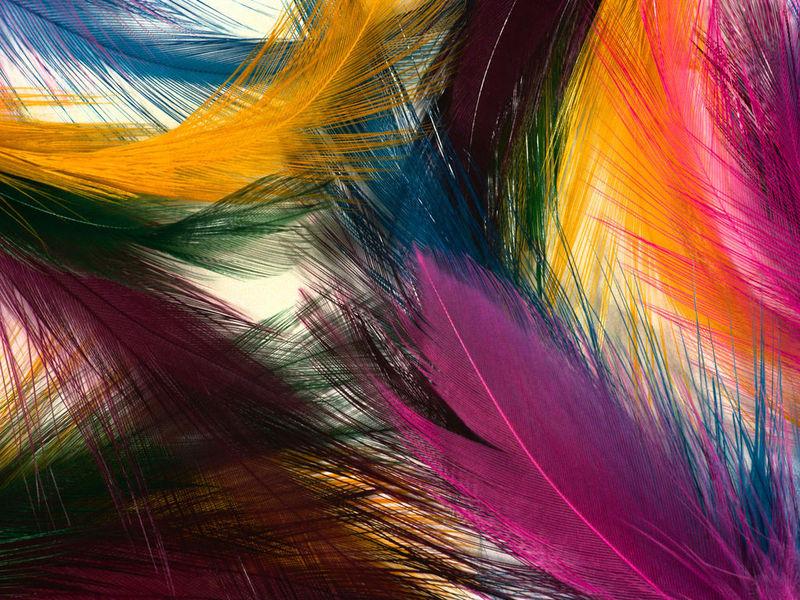 Nice Feathers Free Screensaver