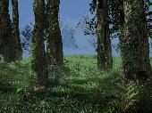 3D Forest Screensaver Screenshot
