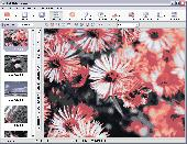PhotoRite Deluxe - Windows photo editor (autofix) Screenshot
