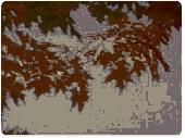 Animated Thanksgiving Hues Wallpaper Screenshot