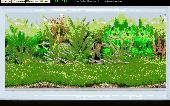 Amago Fish School Screensaver Screenshot