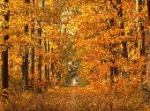 Autumn Animated Wallpaper Screenshot