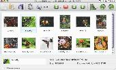 Flickr Gallery for Mac OS Screenshot