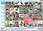 ImagiPass Screenshot