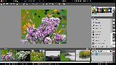 Musemage (32 bit) Screenshot
