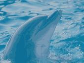 Screenshot of Smart Dolphins Free Screensaver