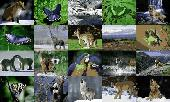 Animals Photo Screensaver Volume 2 Screenshot