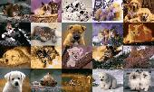 Animals Photo Screensaver Volume 3 Screenshot