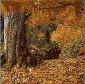 Beautiful Nature Puzzle Screenshot