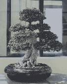 Bonsai Trees for Beginners Screenshot