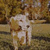 Cute Dog Puzzle Screenshot