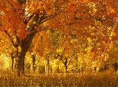 Fall Season Animated Wallpaper Screenshot