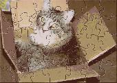 FPA Kitty In A Box Screenshot