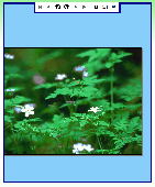 ImageZoom Viewer .Net Control Screenshot