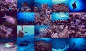 Ocean Life Photo Screensaver Screenshot
