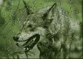 YBN Red Wolf Puzzle Screenshot